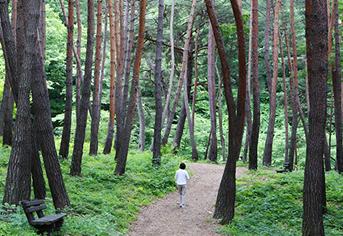 8월에 가볼만한 곳, '힐링의 숲' 명소 6곳