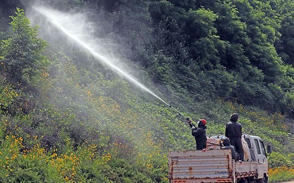 돌발 해충이 발생한 한 지역에서 방제 작업이 진행되고 있다.(사진=저작권자(c) 연합뉴스, 무단 전재-재배포 금지)