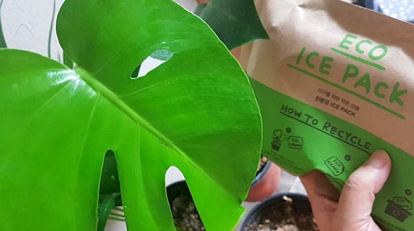 친환경 보냉제는 식물에 비료로 줄 수 있어 직접 해봤다.