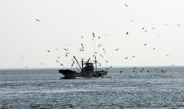 까나리잡이 어선.(사진=옹진군)