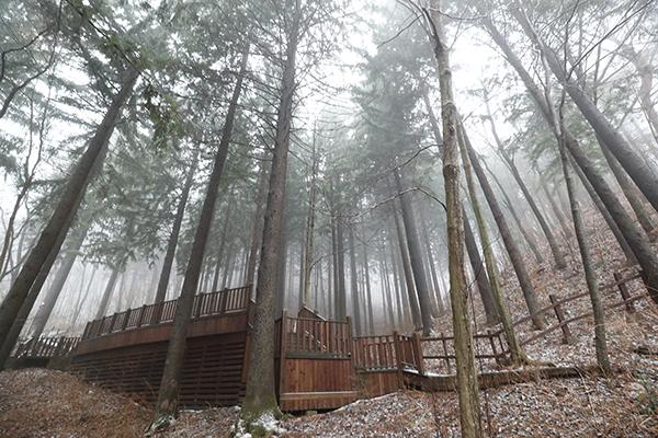 우리나라에서 가장 오래된 독일가문비나무숲이 있는 국립 덕유산 자연휴양림. (사진=저작권자(c) 연합뉴스, 무단 전재-재배포 금지)
