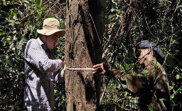 산림조사를 실사하고 있는 캄보디아 공무원 및 지역주민(사진=산림청 제공).