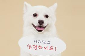 [9월4주] 유기동물 입양하면 최대 10만원 지원