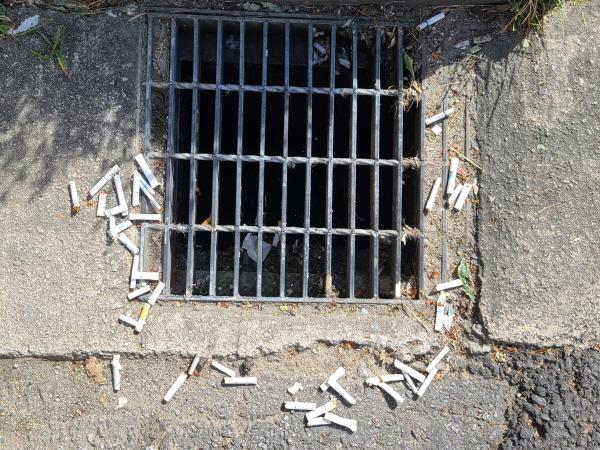 흡연자들이 배수구 주변에 아무런 죄책감없이 담배꽁초를 습관적으로 버려 수북이 쌓여 있다.