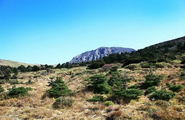 우리 나무 '구상나무' 신종 명명 100주년 기념 특별전 개최