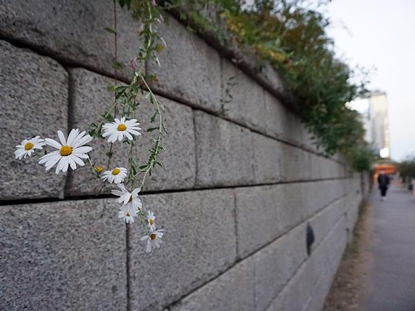 여행을 오면, 미미한 꽃 하나도 커 보이는 법.