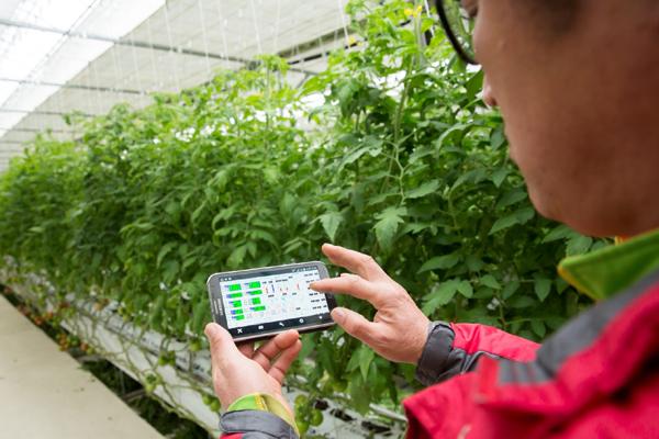 전남 화순의 토마토 농가에서 복합환경제어시스템을 도입해 온실 안팎의 실시간 정보를 관리하고 있다. (사진=농촌진흥청)