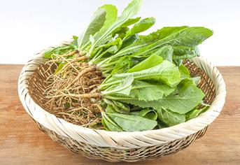 특유의 쌉싸름한 맛으로 혈당 조절에 좋은 식재료는?