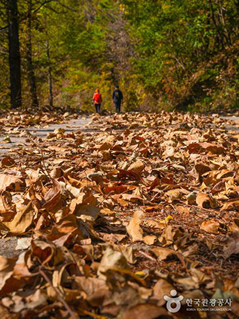 낙엽이 가득한 10월 중순의 길