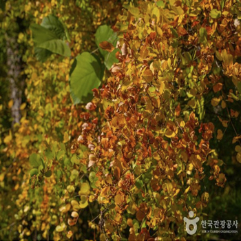 곳곳이 붉게 물든 잎으로 가득하다.