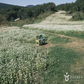 꽃과 함께 쫙 펼쳐진 목장