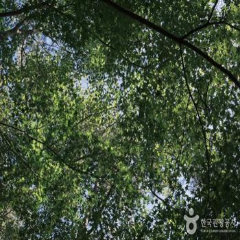 나뭇잎들 사이로 햇살이 비친다