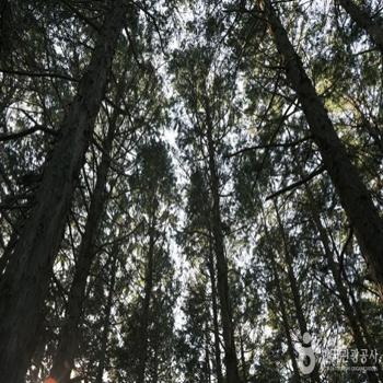 빼곡하게 들어찬 나무