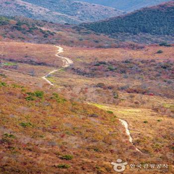 천황산 일원에 펼쳐진 억새밭 사이를 가로지르는 길이 한 폭의 그림 같다
