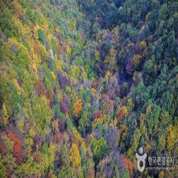 케이블카 발아래로 촬영한 색동저고리 옷을 입은 나무들