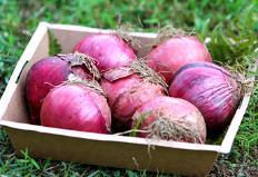 겨울철 면역력 높이는 진보라색 식재료 8가지