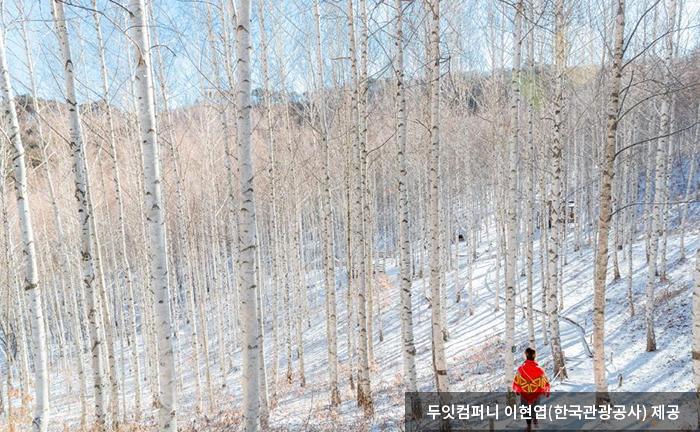 겨울 속 자작나무 군락지 - 두잇컴퍼니 이현엽(한국관광공사) 제공