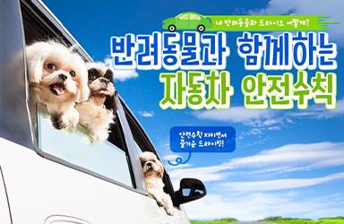 반려동물과 함께하는 자동차 안전수칙!