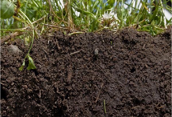 토양 유기물(탄소의 흡수원).
