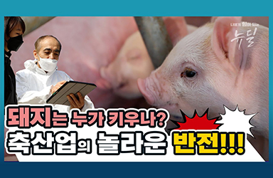 돼지는 누가 키우나? 축산업의 놀라운 반전