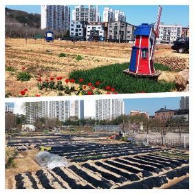 도시농업의 한 형태로 이뤄지는 텃밭 풍경이다.