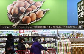 서울 시내 한 대형마트 달걀 판매대.(사진=저작권자(c) 연합뉴스, 무단 전재-재배포 금지)