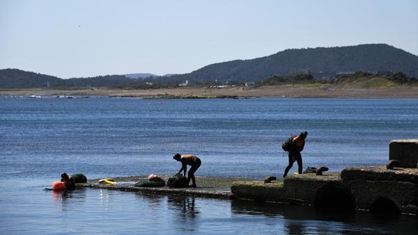 물질을 마치고 채취한 해조류를 지고 성산포에 오르는 해녀들.