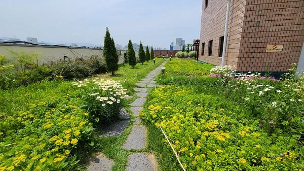 대구시 달서구청 9층 건물 옥상이 정원으로 바뀌었다.