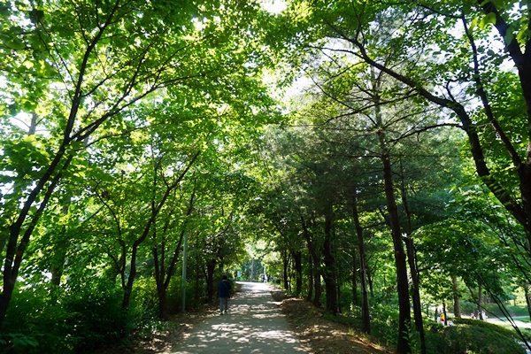 열과 미세먼지를 고스란히 막아줄 듯 우거진 숲.