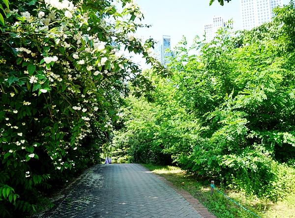 길을 가도 오른쪽과 왼쪽이 다르다 아레를 쳐다보면 꽃 잎이 우수수 떨어져 있다.