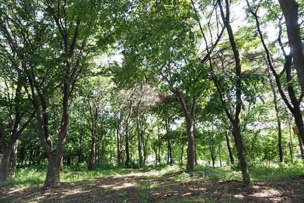 도시숲이 주는 장점을 많은 이가 누리고 있다.