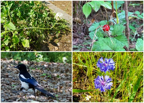 이날 숲에서 발견한 나만의 보물, 길게 휜 네잎클로버 꽃, 뱀딸기, 까치, 이름 모를 꽃