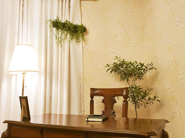 올리브 나무와 디시디아.