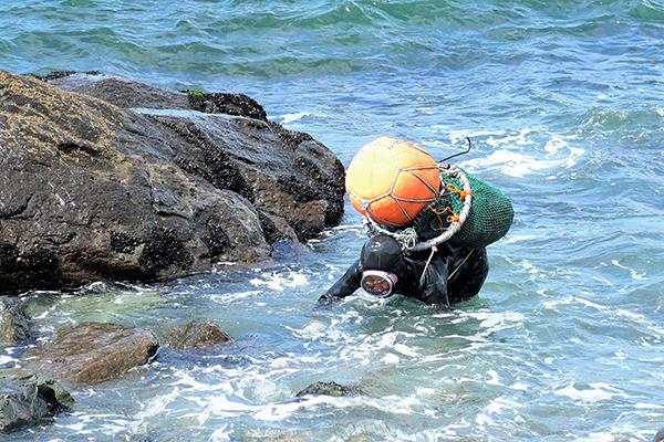 남항동 해안에서 물질을 마치고 뭍으로 올라오는 영도 해녀.