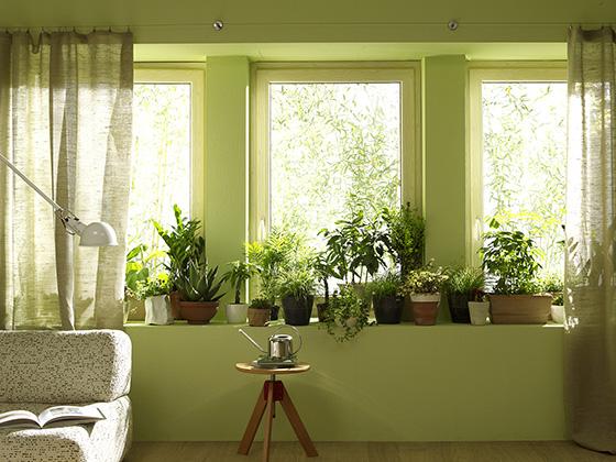공기정화식물이 높여 있는 거실.