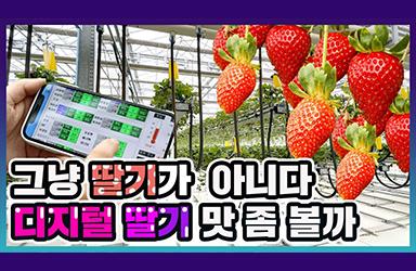 그냥 딸기가 아니다! 디지털 딸기 맛 좀 볼까?