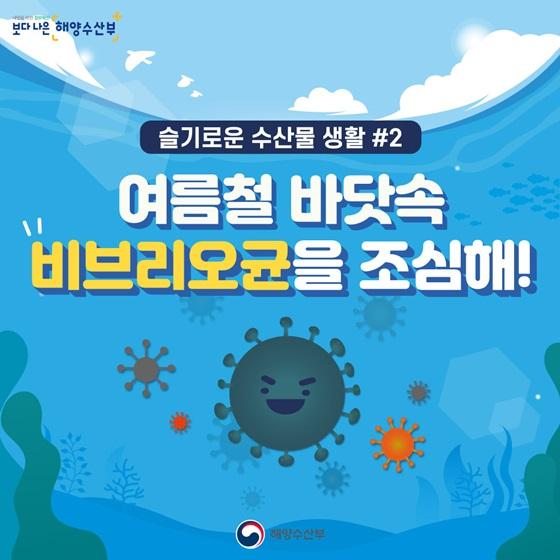 여름철 바닷속 비브리오균을 조심해!