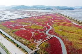 멸종위기종 철새를 비롯해 생물 2천150종이 살아가는 진귀한 생물종의 보고인 '한국의 갯벌'(Getbol, Korean Tidal Flat)이 유네스코 세계유산이 됐다. 중국 푸저우(福州)에서 온라인과 병행해 진행 중인 제44차 세계유산위원회(WHC)는 26일 한국의 갯벌을 세계유산 중 자연유산(Natural Heritage)으로 등재했다. 사진은 전남 신안 갯벌의 가을.(사진=저작권자(c) 연합뉴스, 무단 전재-재배포 금지)