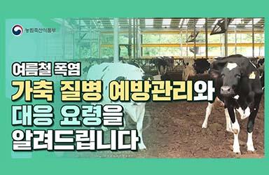 여름철 폭염 가축 질병 예방관리와 대응 요령