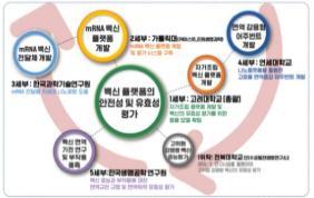 mRNA백신 플랫폼 구축 및 유효성 평가기술 연구체계.