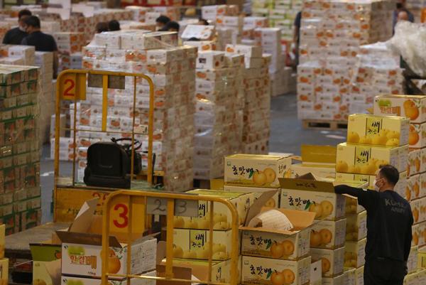 지난해 추석을 앞두고 서울 송파구 가락동농수산물도매시장에 각 지역에서 올라온 과일들이 하역 작업 중이다.(사진=국민소통실)