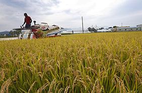 내년부터 만 60세 이상 농업인이 농지를 담보로 농지연금을 받을 수 있다.
