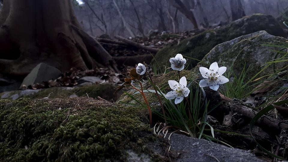 우리 꽃들의 향연이 벌어지다