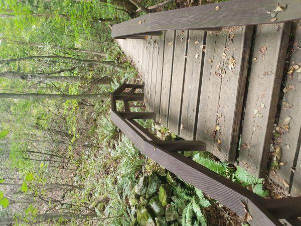 작년 가을 강원도 여행에서 그린카드를 이용해 무료로 국립공원을 둘러봤다. 사진은 국립공원 자연휴양림 산책길.