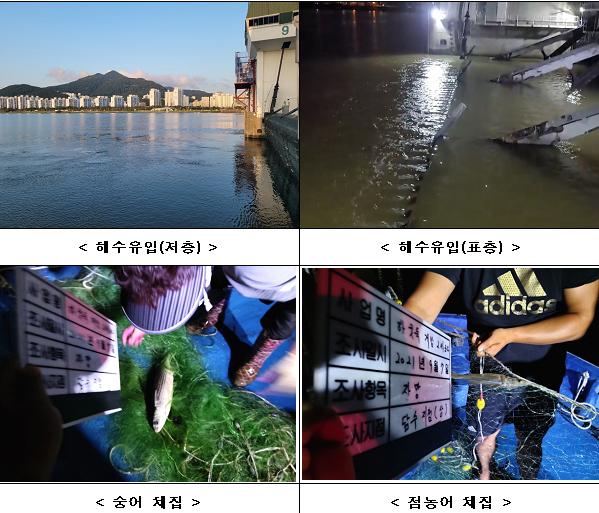 3차 개방운영 현장사진. 왼쪽 위부터 시계방향으로 해수유입(저층), 해수유입(표층), 숭어 채집, 점농어 채집 모습.
