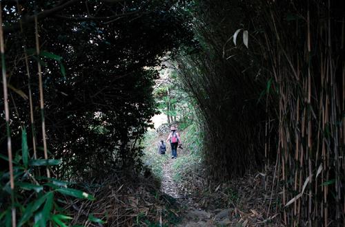 여천마을 부근의 내리막길에서 만나는 대나무 숲길.