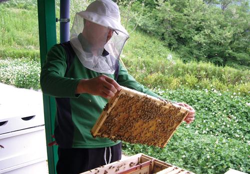 예천군의 꿀벌육종연구센터는 국내 환경에 적합한 우수 꿀벌 개발과 보급을 위해 2009년 설립됐다.
