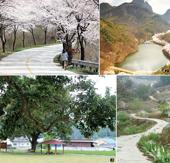 진안고원 벚꽃길.