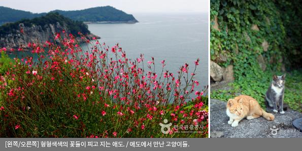[왼쪽/오른쪽]형형색색의 꽃들이 피고 지는 애도 / 애도에서 만난 고양이들
