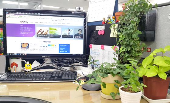 사무실에 화초가 놓여져 있다.